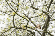 Girl climbing spring apple blossom tree - FSIF03379