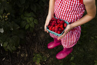 Low section of girl holding harvested raspberries in container while standing at farm - CAVF49131
