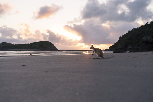 Joey at beach against cloudy sky during sunset - CAVF49203