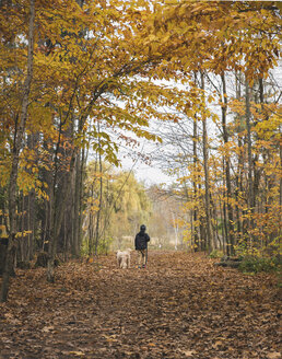 Rear view of boy with dog walking on fallen leaves in forest during autumn - CAVF49524
