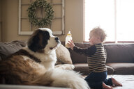 Side view of cute baby boy showing milk bottle to dog on sofa at home - CAVF49593