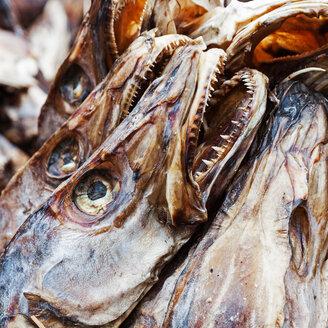 Stockfish fish heads - INGF01806