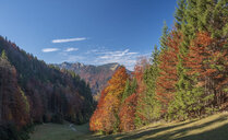 Germany, Upper Bavaria, Aschau, forest in autumn - HAMF00514