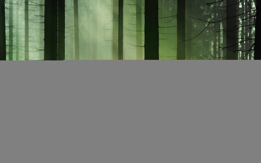 The heart of the forest. Deep dark green and light atmosphere - INGF02018