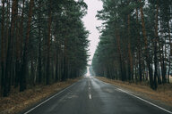 Empty country road through pine forest - VPIF00925