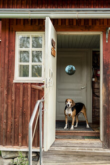 Dog standing at opened door in holiday home looking outside - PSIF00120