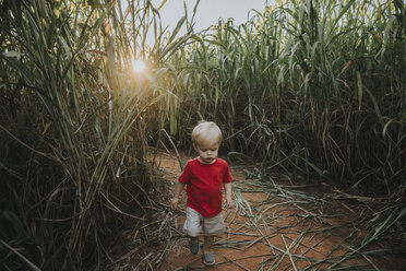 High angle view of baby boy walking on field amidst crops at farm during sunset - CAVF50100