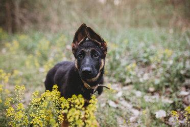 Portrait of black dog standing amidst plants at park - CAVF50250