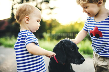 Toddler and his little sister stroking dog outdoors - HAPF02789