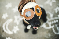 Portrait of black dog wearing flying goggles and hat - HAPF02792
