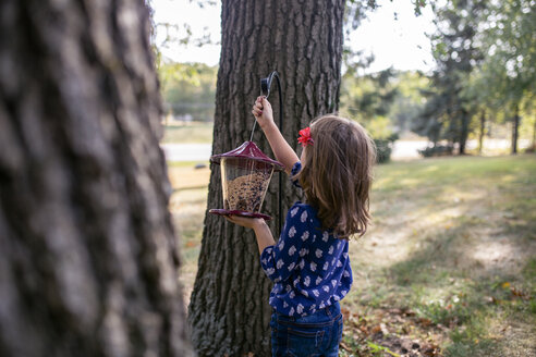 Girl hanging bird feeder on tree trunk while standing in yard - CAVF51033