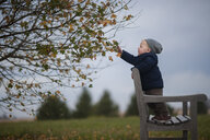 Side view of baby boy standing on bench by tree at park during autumn - CAVF51120