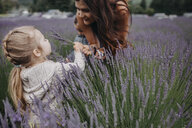 Daughter giving lavenders to mother on field - CAVF51616