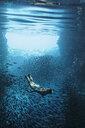 Young woman snorkeling underwater among schools of fish, Vava'u, Tonga, Pacific Ocean - HOXF04153