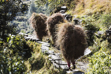 Men carrying bundles of grass on sunny footpath, Supi Bageshwar, Uttarakhand, Indian Himalayan Foothills - HOXF04174