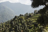 Sunny scenic view green foothills, Supi Bageshwar, Uttarakhand, Indian Himalayan Foothills - HOXF04177