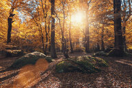 Nature shot of trees in the forest during autumn - INGF05275
