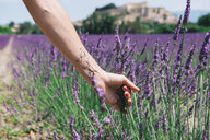 France, Provence, Grignan, Woman's arm with a world map temporary tatoo in a lavander field - GEMF02432