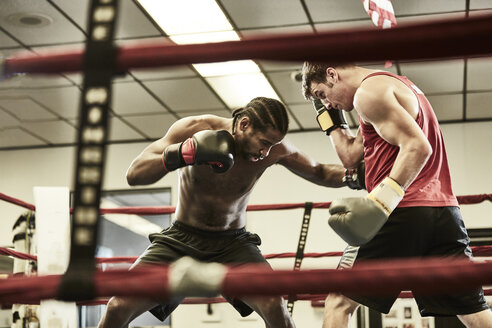 Male boxers practicing in boxing ring at health club - TGBF00670