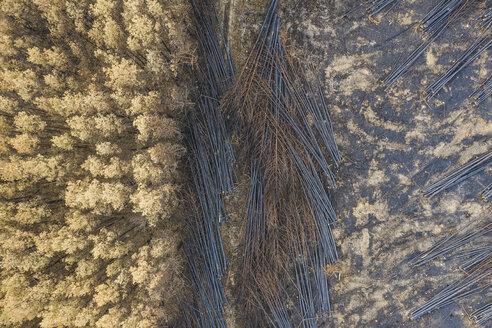 Germany, Brandenburg, Treuenbrietzen, Forest, Aerial view of slash and burn - ASCF00906