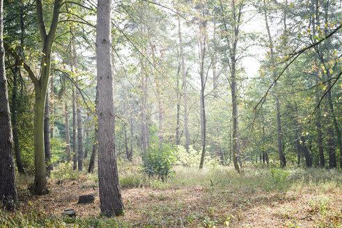 Germany, Rhein-Neckar-Kreis, Dossenwald, Nature Preserve - CZF00337