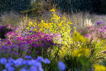 Flowers in garden in autumn - NDF00817
