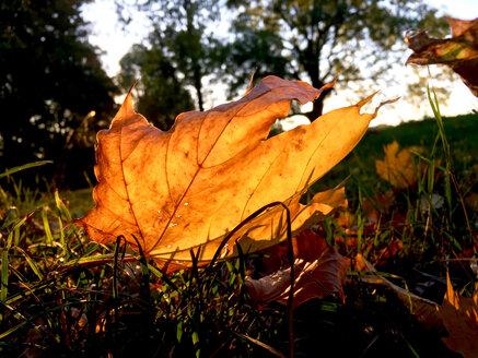 Autumn evening,Germany - JTF01126
