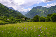 Albania, Shkoder County, Albanian Alps, Theth National Park, flower meadow - SIEF08091