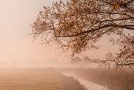 Autumn mist in the Teufelsmoor - INGF05655