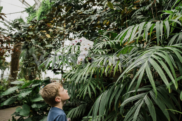 Side view of boy looking at butterfly on plant at greenhouse - CAVF52715