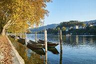 Switzerland, Canton of Schaffhausen, Schaffhausen, Rhine river and traditional Weidlings in autumn - ELF01932