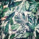 Fresh green tropical leaves - INGF06224