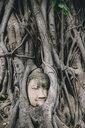 Thailand, Ayutthaya, Buddha head in between tree roots at Wat Mahathat - GEMF02459