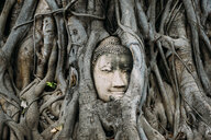 Thailand, Ayutthaya, Buddha head in between tree roots at Wat Mahathat - GEMF02462