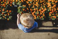 High angle view of baby boy standing by flowers at garden - CAVF53376