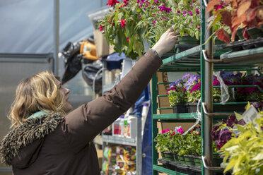 Female entrepreneur examining plants in garden center - CAVF53379