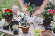 Midsection of woman potting plant on table in yard - CAVF53385
