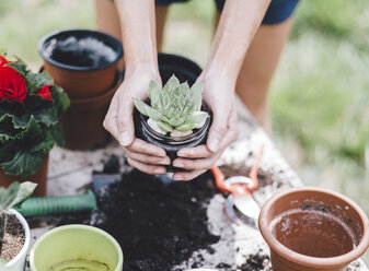 Midsection of woman holding succulent plant over table in yard - CAVF53388