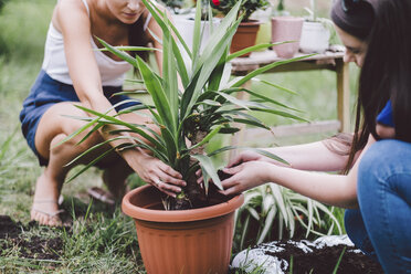 Female friends potting plant while crouching on field at yard - CAVF53391