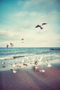 Seagulls flying over the sea under a cloudy sky - INGF06393