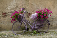 Italy, old bicycle with flowers - LBF02171