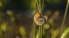Close-up of snail on plant - CAVF53930