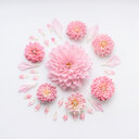 Close-up of pink flowers over a white background - INGF06547