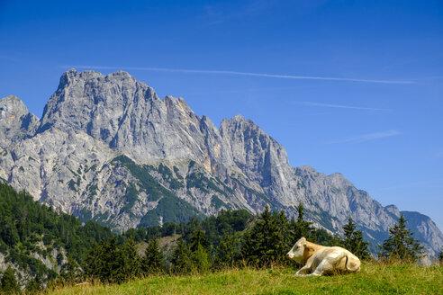 Austria, Salzburg State, Pinzgau, Grosses Muehlsturzhorn, Litzlalm, cow lying on meadow - LBF02202