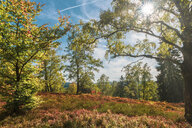 Germany, Lower Saxony, Extertal, Forest, golden october - FRF00754
