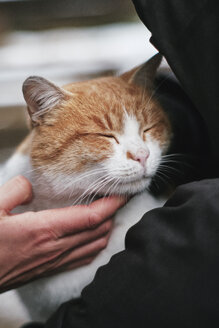 Hand stroking relaxed cat - BZF00468