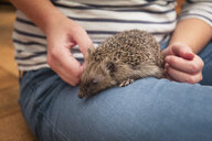 Woman with hedgehog on her thigh, close-up - MAMF00216