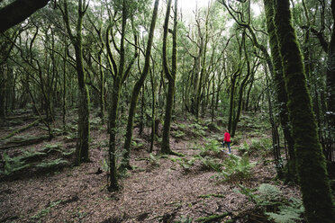 Female hiker amidst trees in forest at Garajonay National Park - CAVF54332