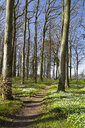 Germany, Mecklenburg-Western Pomerania, Warnemuende, Forest in spring, empty way - MELF00195