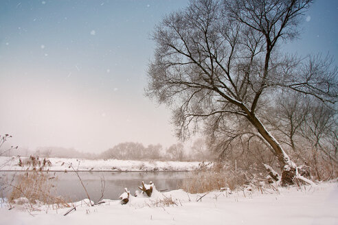 Bare trees on a deserted snowy field during winter - INGF07666